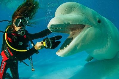 Лучшее подводное снаряжени